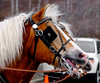 20160130_141442 - 0266 - Winter Days - Horse Drawn Sleigh Rides_LowRes