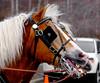 20160130_141442 - 0266 - Winter Days - Horse Drawn Sleigh Rides_LowRes
