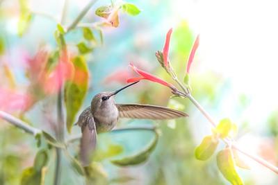 SPRING PASTEL HUMMINGBIRD