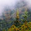 Smoky Mountains 174