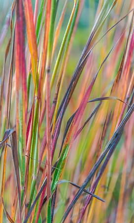 AUTUMN GRASS   17