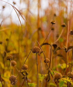 AUTUMN GRASS   4