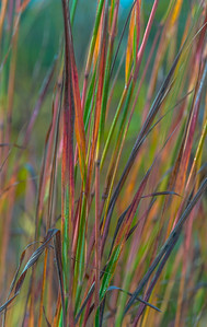 AUTUMN GRASS   11