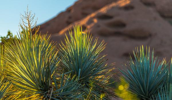 Desert Art  18
