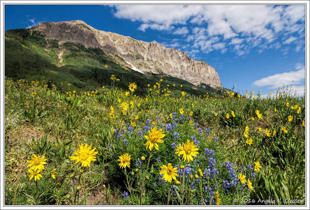 Wildflowers, Gothic Road, Crested Butte, Colorado