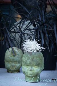 Tillandsia tectorum baby head container - Ophiopogon planiscapus_6535