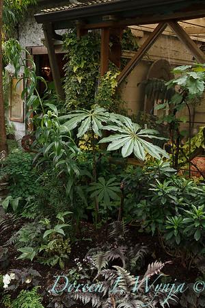 Arisaema consanguineum shade garden_3654