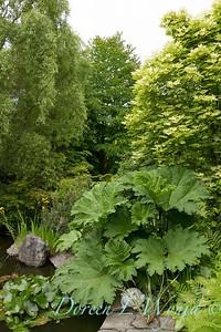 Gunnera manicata by a pond_4279