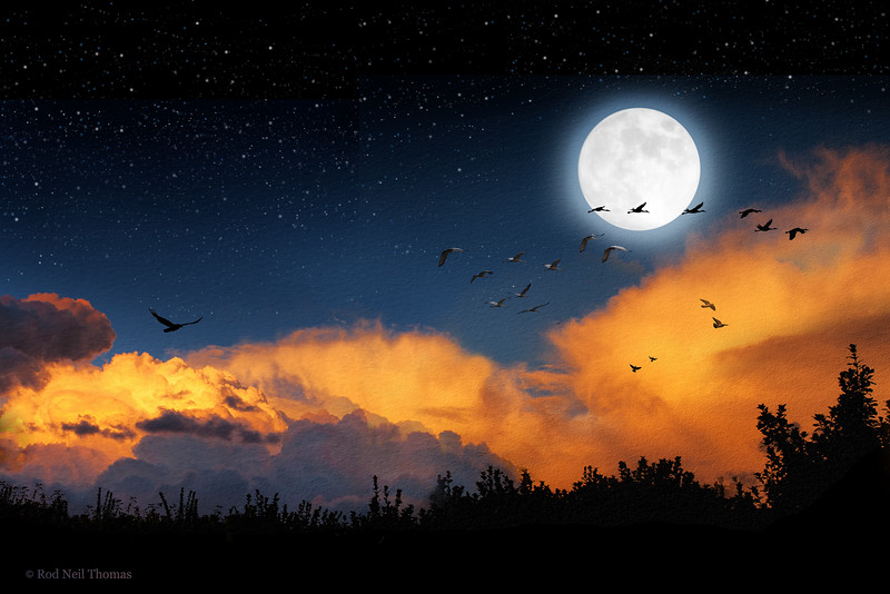 MOONLIGHT MIGRATION