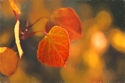 Aspen Leaves In Autumn 060 | Wall Art Resource