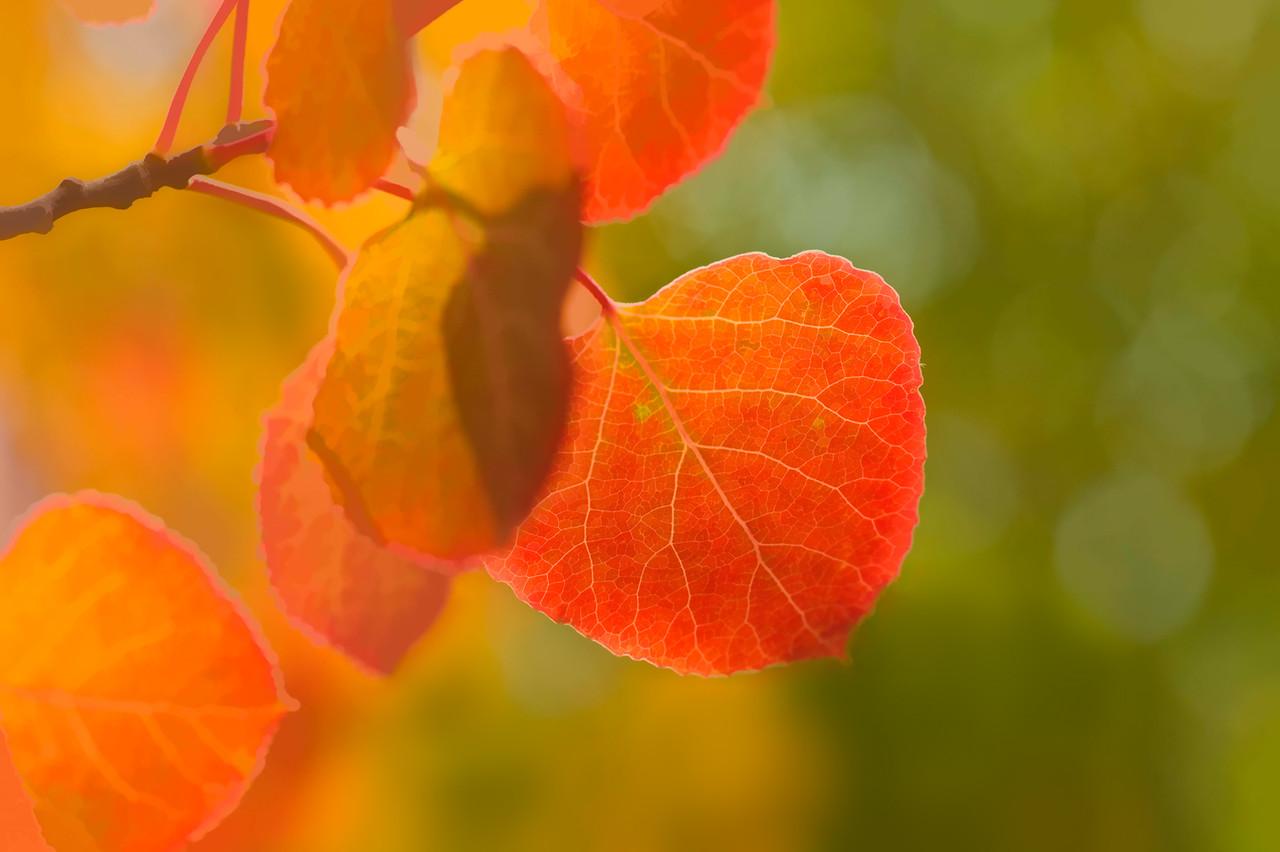 Colorado Fall Foliage 015 | Wall Art Resource