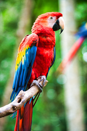 Colorful Parrots 007 | Wall Art Resource