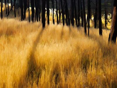 Forest Grass | Wall Art Resource