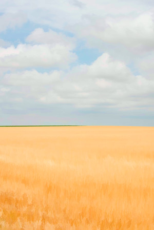 Fields Of Gold 002 | Wall Art Resource