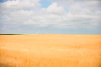 Fields Of Gold 001 | Wall Art Resource