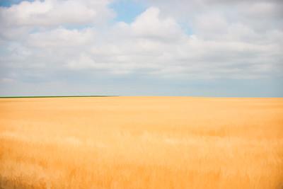 Fields Of Gold 001 | Wall Art Resource