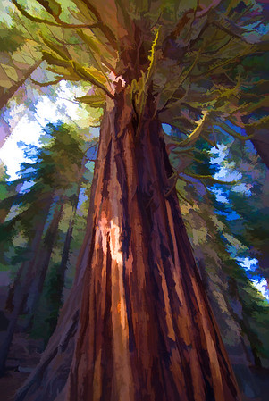 Giant Redwood | Wall Art Resource