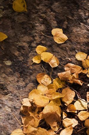 Aspen Leaves In Autumn 062 | Wall Art Resource
