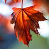 Colorado Fall Foliage 002   Wall Art Resource