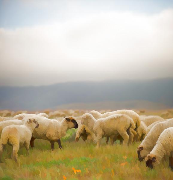 Grazing Sheep 001 | Wall Art Resource