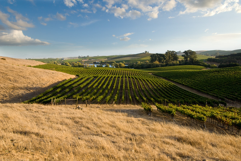 Napa Valley Vineyards 006 | Wall Art Resource