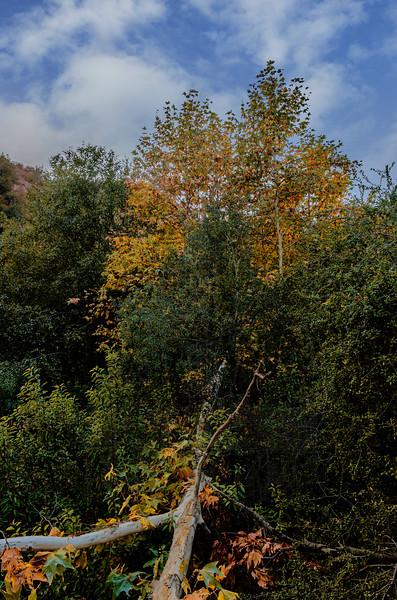 Fall Color at Arroyo Seco