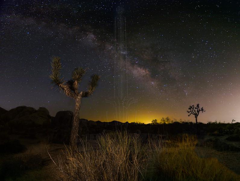Milky Way over Joshua Trees in Joshua Tree National Park.