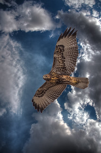 Red Tail 2