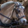 horse1-3