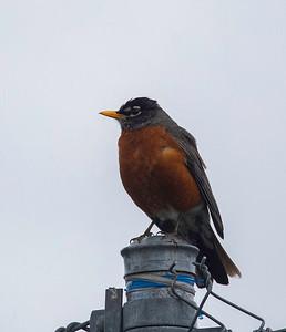 Bird 1-2
