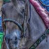 horse1-2
