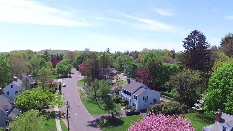 Aimlessly flying around the neighborhood during spring tree-blooming season
