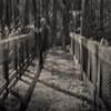 Loxahatchee Cypress Swamp