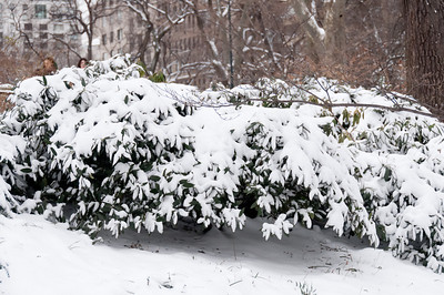 CENTRAL PARK WITH SNOW! - 21 JAN 2012