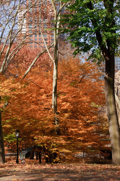 FALL COLORS IN CENTRAL PARK - 21 NOV 2010