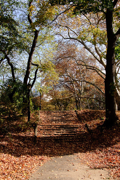 FALL COLORS IN CENTRAL PARK - November 7, 2009
