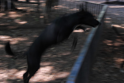 TOMPKINS SQUARE PARK - July 8, 2006