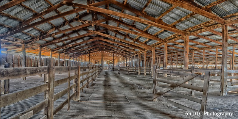 Shearing shed, Yanga