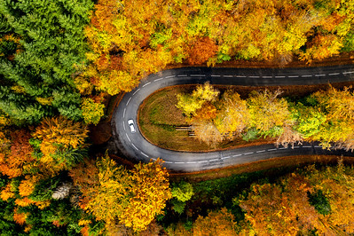 Zigzag road, framed by orange autumn forest. Serpentine climbs the Vosges mountains in Alsace. The geometry of the road loop looks amazing from above.