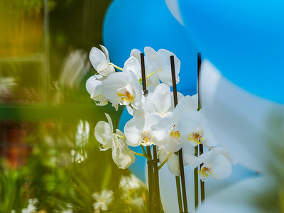 Delicate white orchids as a gift for the holiday. Bokeh.