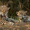 Jaguar_Dusan Brinkhuizen_8561