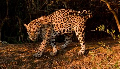 Jaguar_Dusan Brinkhuizen_8654