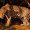 Jaguar-Dusan Brinkhuizen-8622