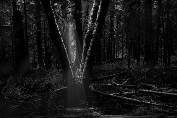 Chasing coastal forest light