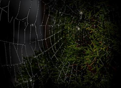 Magic Web