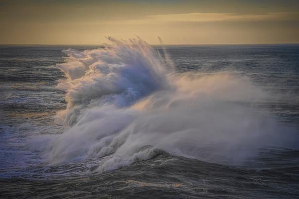 Fuzzy Ocean Logic - Newport Oregon