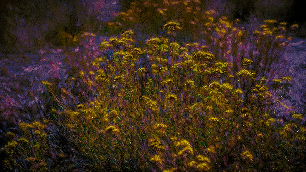 Prairie Flower Abstract