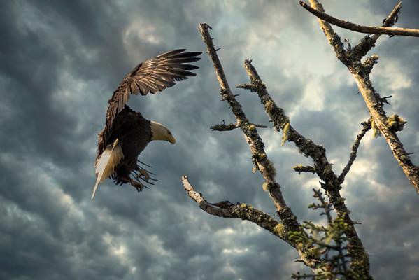 Parent Eagle Returns