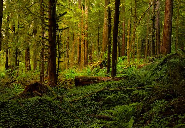 Deep in the Oregon Coastal Forest