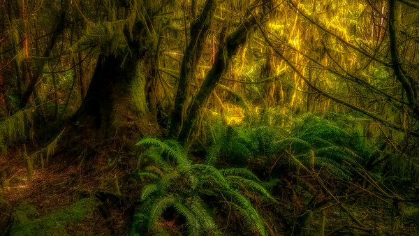Coastal Forest Mysteries